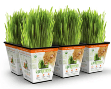Pet Greens Cat Grass