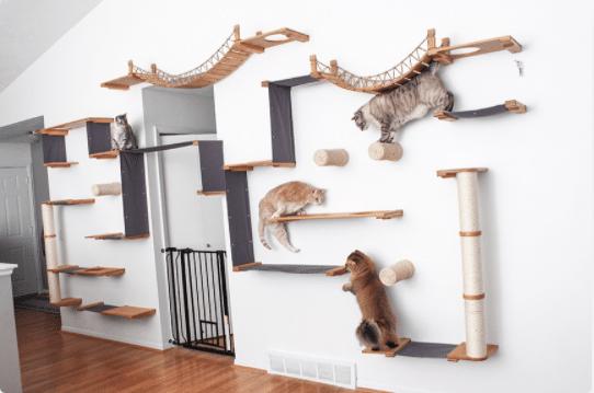 A cat wall